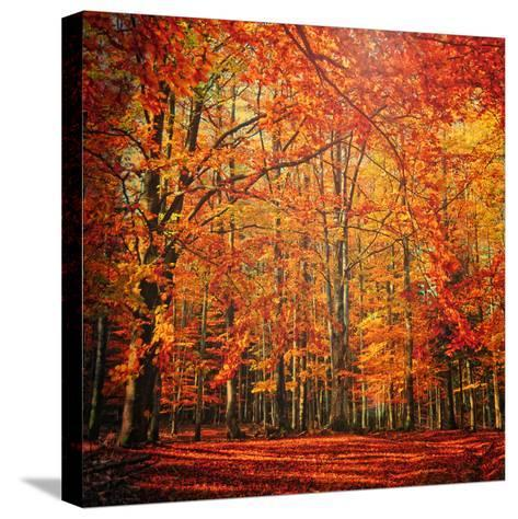 Red November-Philippe Sainte-Laudy-Stretched Canvas Print