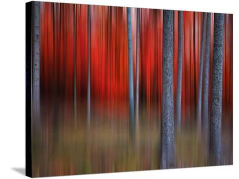 Gimick-Philippe Sainte-Laudy-Stretched Canvas Print
