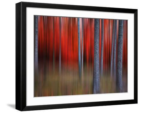 Gimick-Philippe Sainte-Laudy-Framed Art Print