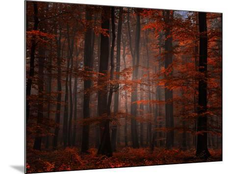 Spiritual Wood-Philippe Sainte-Laudy-Mounted Photographic Print