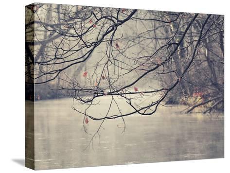 Parenthesis-Philippe Sainte-Laudy-Stretched Canvas Print