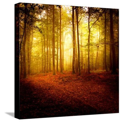 The Smell of Autumn-Philippe Sainte-Laudy-Stretched Canvas Print