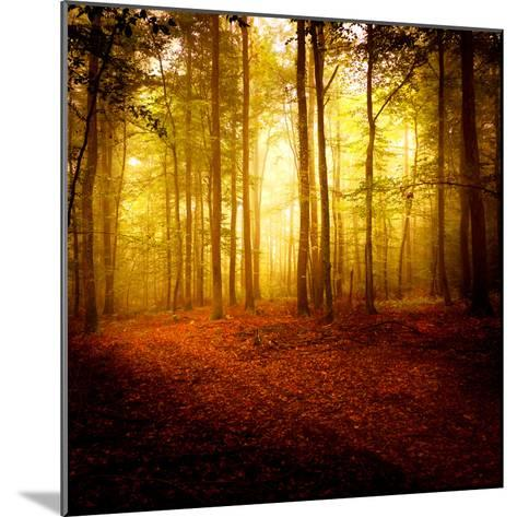 The Smell of Autumn-Philippe Sainte-Laudy-Mounted Photographic Print
