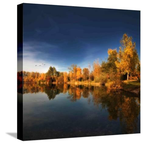 Gold Rush-Philippe Sainte-Laudy-Stretched Canvas Print