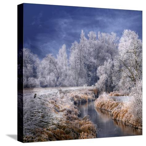 Winter Stream-Philippe Sainte-Laudy-Stretched Canvas Print