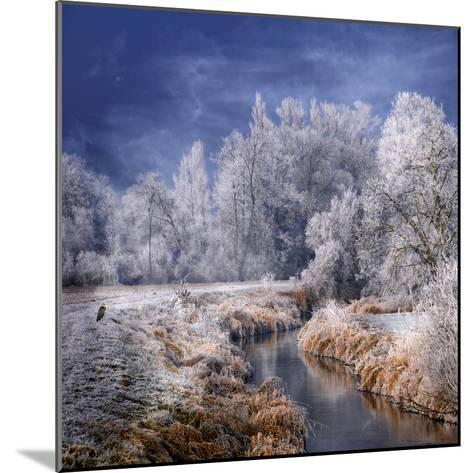 Winter Stream-Philippe Sainte-Laudy-Mounted Photographic Print