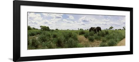 African Elephants (Loxodonta Africana) in a Field, Kruger National Park, South Africa--Framed Art Print