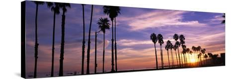 Silhouette of Palm Trees at Sunset, Santa Barbara, California, USA--Stretched Canvas Print