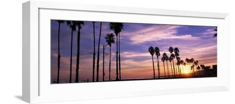 Silhouette of Palm Trees at Sunset, Santa Barbara, California, USA--Framed Art Print