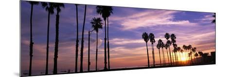 Silhouette of Palm Trees at Sunset, Santa Barbara, California, USA--Mounted Photographic Print