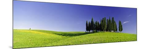 Trees on a Landscape, Val D'Orcia, Siena Province, Tuscany, Italy--Mounted Photographic Print