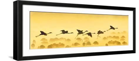 Flamingos Landing, Kenya--Framed Art Print