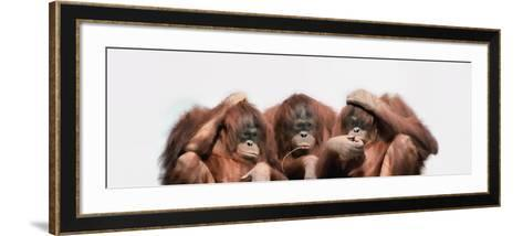 Close-Up of Three Orangutans--Framed Art Print