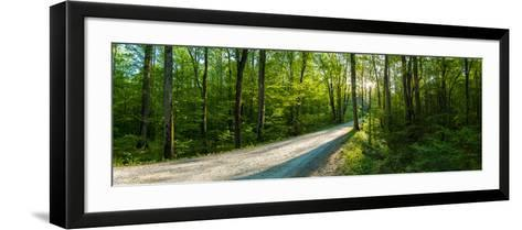 Dirt Road Passing Through a Forest, Great Smoky Mountains National Park, Blount County, Tennesse...--Framed Art Print
