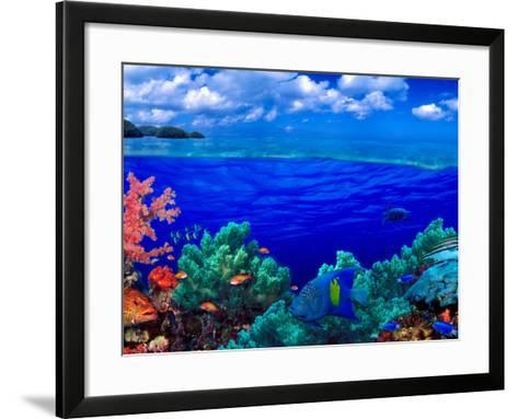 Underwater View of Yellowbar Angelfish (Pomacanthus Maculosus) with Tiger Grouper (Mycteroperca ...--Framed Art Print