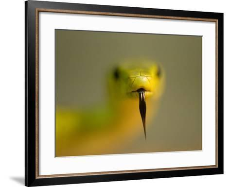 An Eastern Green Mamba, Dendroaspis Angusticeps, at the Houston Zoo-Joel Sartore-Framed Art Print