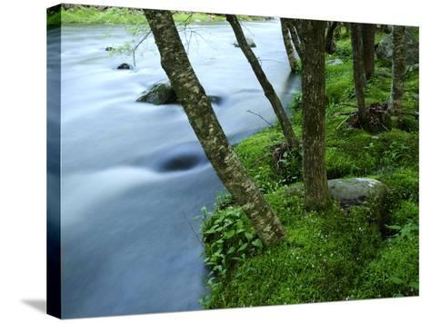 The Little River Rushing Past River Banks Lined with Birch Trees-Darlyne A^ Murawski-Stretched Canvas Print