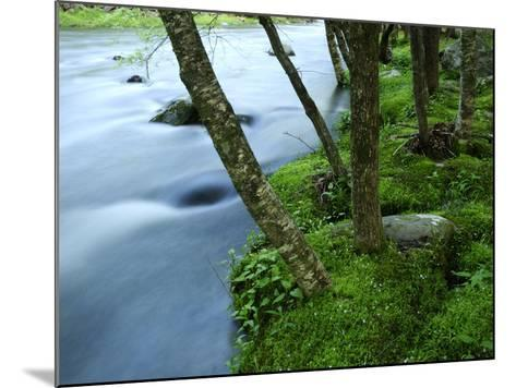 The Little River Rushing Past River Banks Lined with Birch Trees-Darlyne A^ Murawski-Mounted Photographic Print