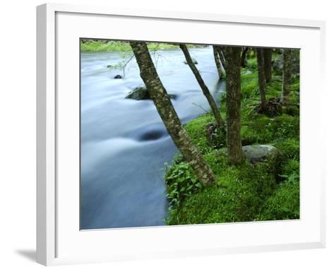 The Little River Rushing Past River Banks Lined with Birch Trees-Darlyne A^ Murawski-Framed Art Print