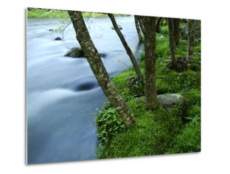 The Little River Rushing Past River Banks Lined with Birch Trees-Darlyne A^ Murawski-Metal Print