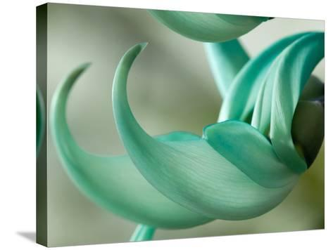 Close Up of Two Jade Vine Flowers, Strongylodon Macrobotrys-Darlyne A^ Murawski-Stretched Canvas Print