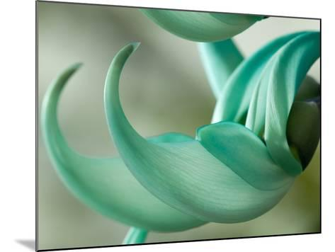 Close Up of Two Jade Vine Flowers, Strongylodon Macrobotrys-Darlyne A^ Murawski-Mounted Photographic Print