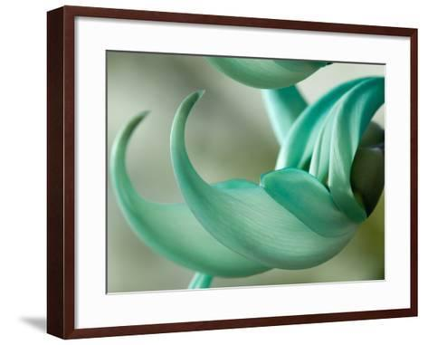 Close Up of Two Jade Vine Flowers, Strongylodon Macrobotrys-Darlyne A^ Murawski-Framed Art Print