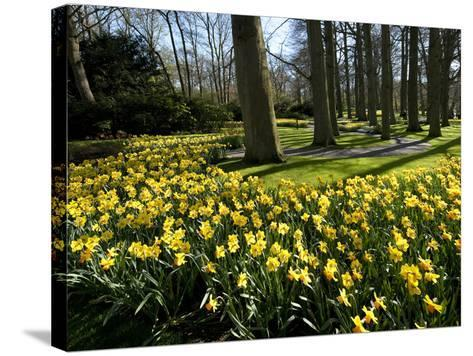 Daffodils in Bloom around Trees in a Public Garden-James P^ Blair-Stretched Canvas Print