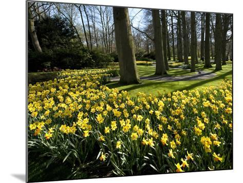 Daffodils in Bloom around Trees in a Public Garden-James P^ Blair-Mounted Photographic Print