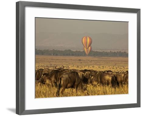 A Herd of Migrating Wildebeests, Connochaetes Taurinus-Beverly Joubert-Framed Art Print