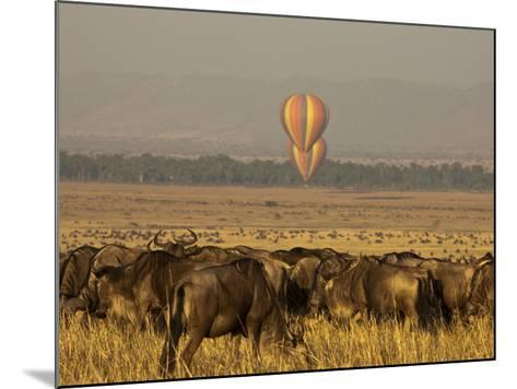 A Herd of Migrating Wildebeests, Connochaetes Taurinus-Beverly Joubert-Mounted Photographic Print