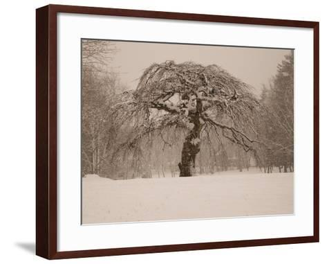 Trees and Landscape Covered in a Blanket of Snow-Heather Perry-Framed Art Print