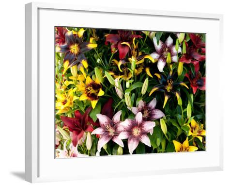 A Showy Arrangement of a Mix of Lily Flowers, Lilium Species-Darlyne A^ Murawski-Framed Art Print