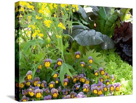 A Mixed Species Garden Patch with Pansies, Lettuce and Other Plants-Darlyne A^ Murawski-Stretched Canvas Print