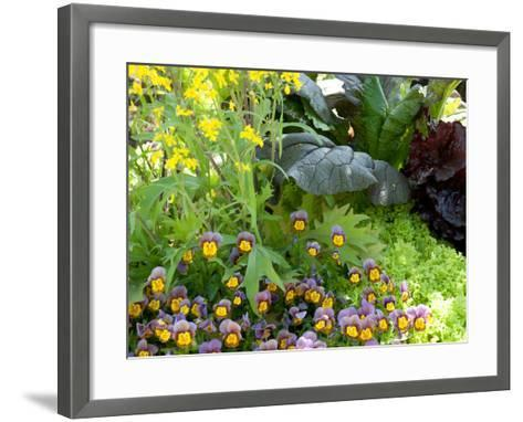 A Mixed Species Garden Patch with Pansies, Lettuce and Other Plants-Darlyne A^ Murawski-Framed Art Print