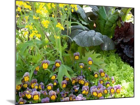 A Mixed Species Garden Patch with Pansies, Lettuce and Other Plants-Darlyne A^ Murawski-Mounted Photographic Print