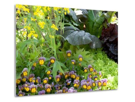 A Mixed Species Garden Patch with Pansies, Lettuce and Other Plants-Darlyne A^ Murawski-Metal Print
