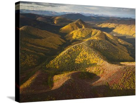 Poplars and Tundra in Fall Colors-Michael Melford-Stretched Canvas Print