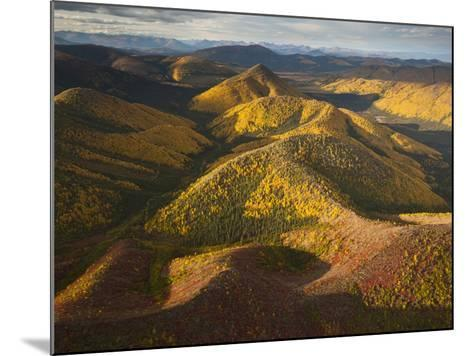 Poplars and Tundra in Fall Colors-Michael Melford-Mounted Photographic Print