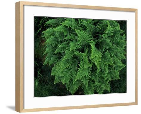 Fisheye Lens View of a Vibrant Green Fern-Norbert Rosing-Framed Art Print