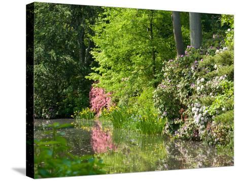 A Springtime View of Plants Blooming Along the Side of a Pond-Darlyne A^ Murawski-Stretched Canvas Print