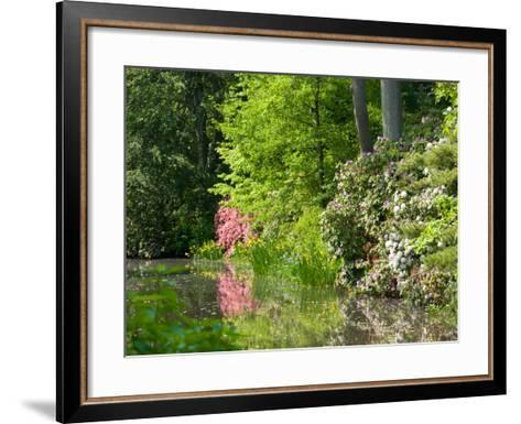 A Springtime View of Plants Blooming Along the Side of a Pond-Darlyne A^ Murawski-Framed Art Print