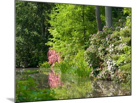A Springtime View of Plants Blooming Along the Side of a Pond-Darlyne A^ Murawski-Mounted Photographic Print