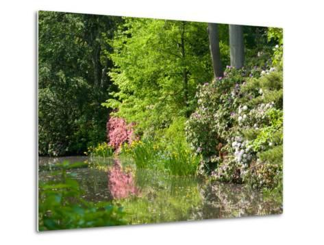 A Springtime View of Plants Blooming Along the Side of a Pond-Darlyne A^ Murawski-Metal Print