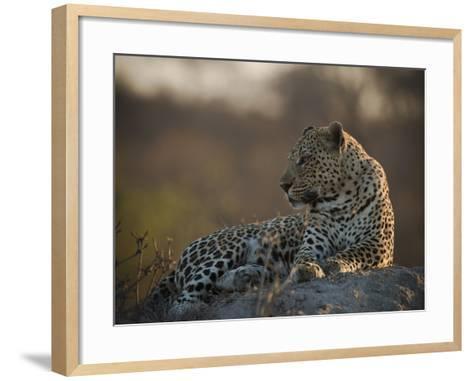 A Leopard, Panthera Pardus, Resting-Beverly Joubert-Framed Art Print