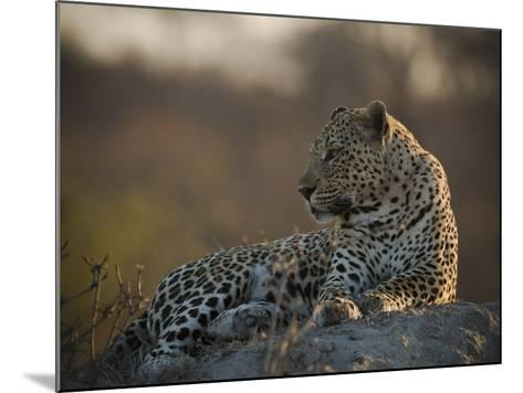A Leopard, Panthera Pardus, Resting-Beverly Joubert-Mounted Photographic Print