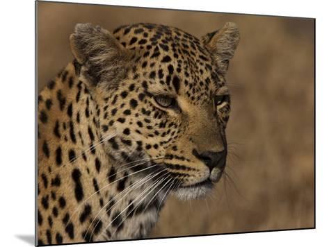 Portrait of a Leopard, Panthera Pardus-Beverly Joubert-Mounted Photographic Print