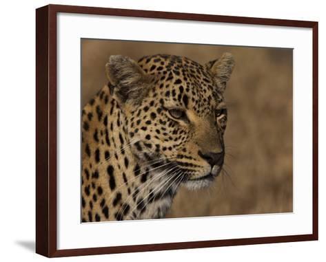 Portrait of a Leopard, Panthera Pardus-Beverly Joubert-Framed Art Print