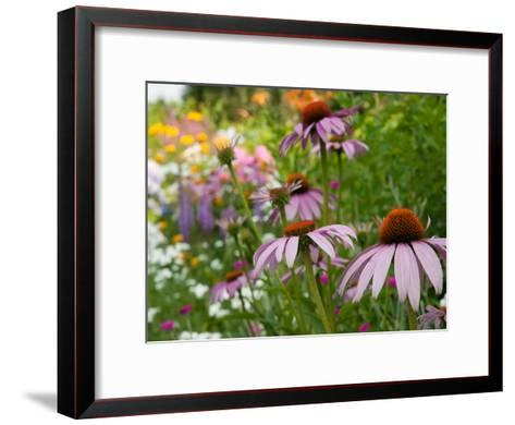 Purple Coneflower and Other Flowers in a Cape Cod Garden-Darlyne A^ Murawski-Framed Art Print