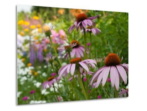 Purple Coneflower and Other Flowers in a Cape Cod Garden-Darlyne A^ Murawski-Metal Print